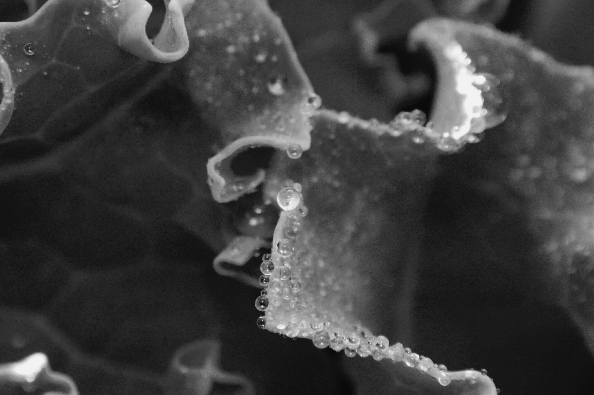 water droplets black and white